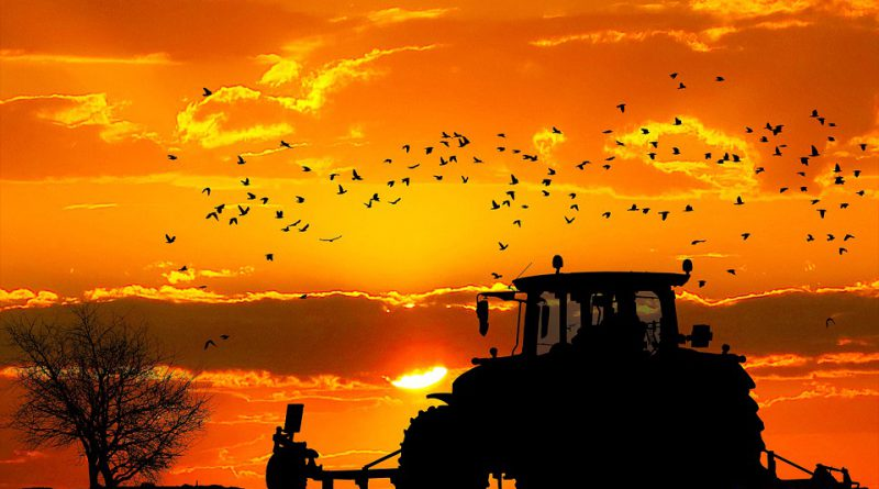 rolnictwo Holandia 2020