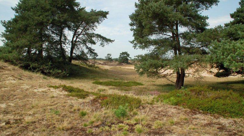 Holandia Drenthe atrakcje wakacje ciekawostki