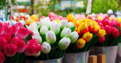 Holandia drewniane tulipany
