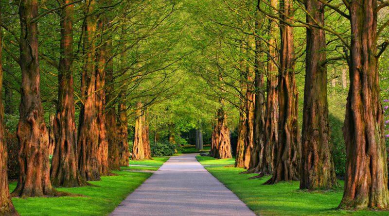 Holandia drzewa quiz 2020 ciekawostki