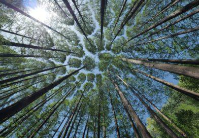 Holandia las grzybobranie Utrecht sadzenie drzew 2020 2021