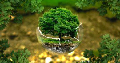 Holandia ekologia lasy wycinka 2021 WWF