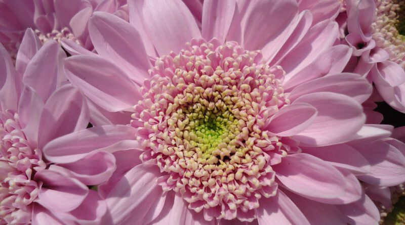 Holandia kwiaty