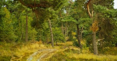 Holandia rezerwat park narodowy atrakcje 2021