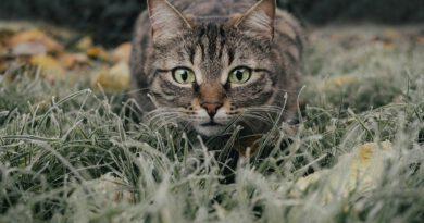 Holandia koty godzina policyjna natura przyroda