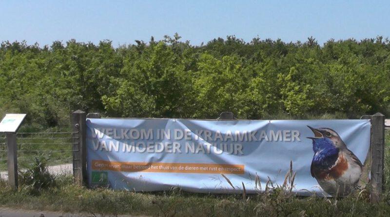 Holandia Bentwoud przyroda natura rezerwat przyrody