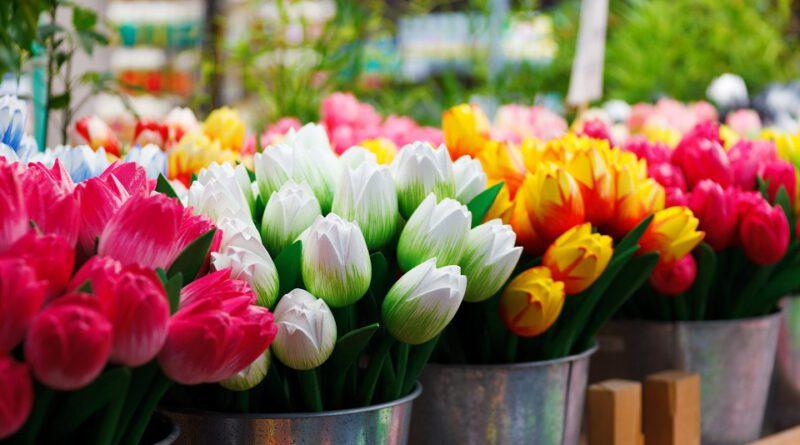 holandia tulipany 2021 koronawirus